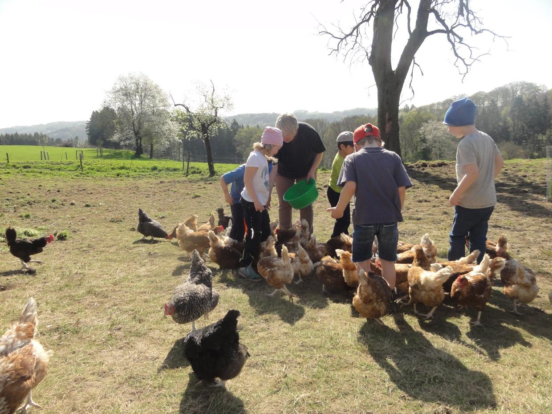 Bauernhof...Hühner